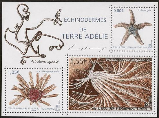 92a 02 01 2018 echinodermes de terre adelie